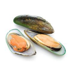 新西南新鲜鲜冻 半壳青口贝 500g 进口海鲜水产
